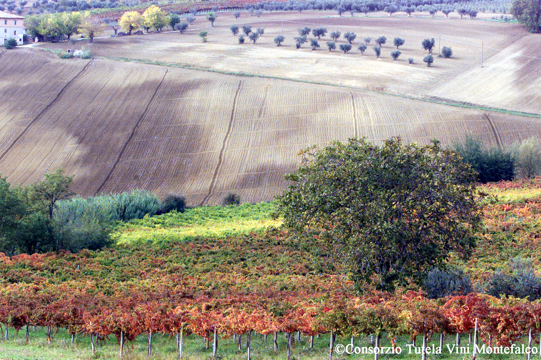 Paesaggio4.jpg
