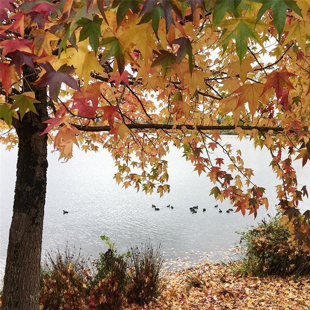 Green Lake is beautiful in the fall 🍁