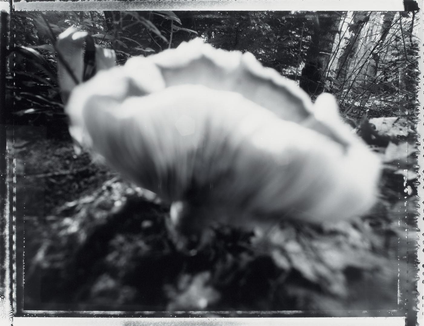 Coloma to Covert: Fleshy Fungi