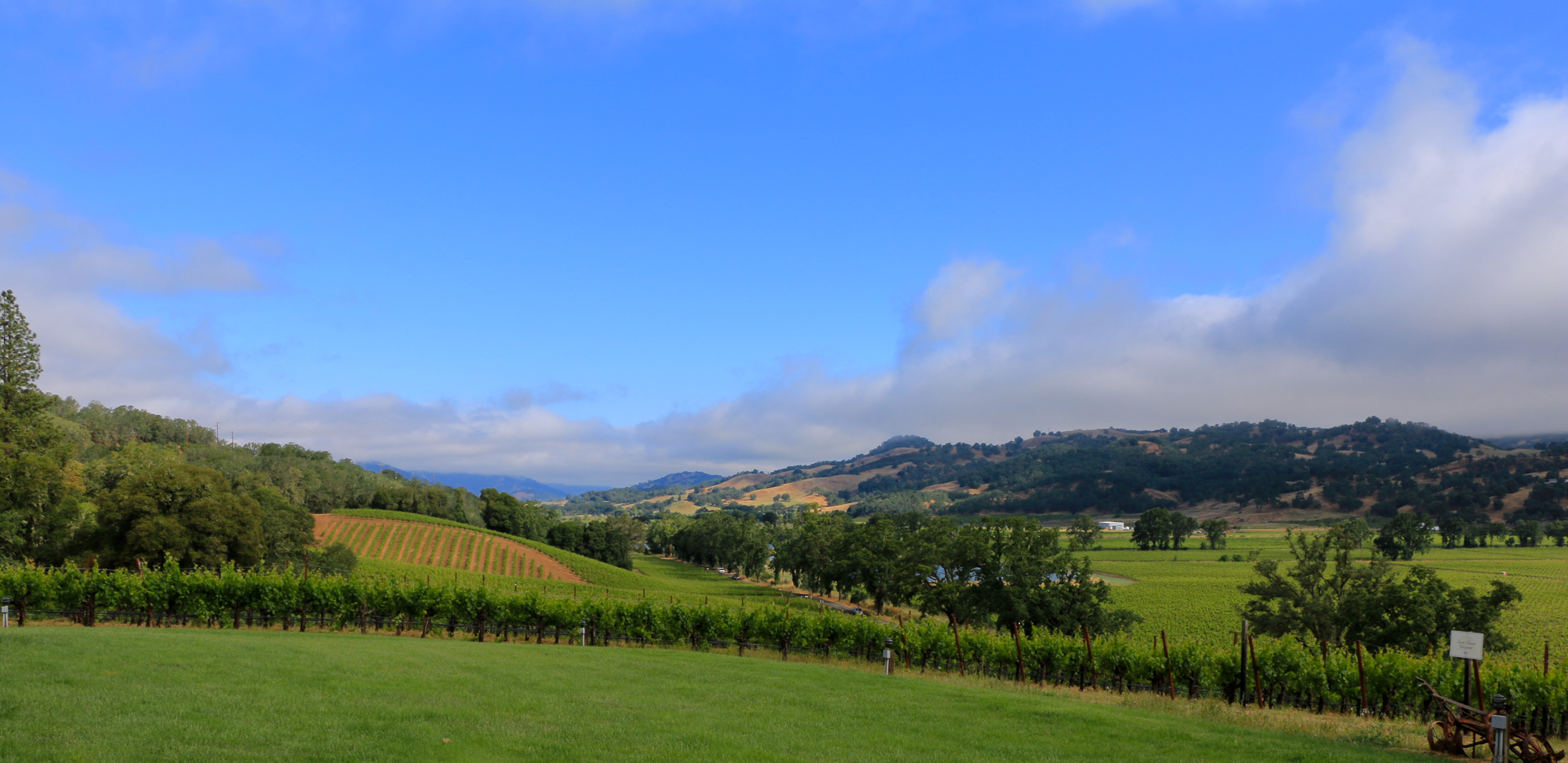 Contento_Vineyard_2_sm copy.jpg