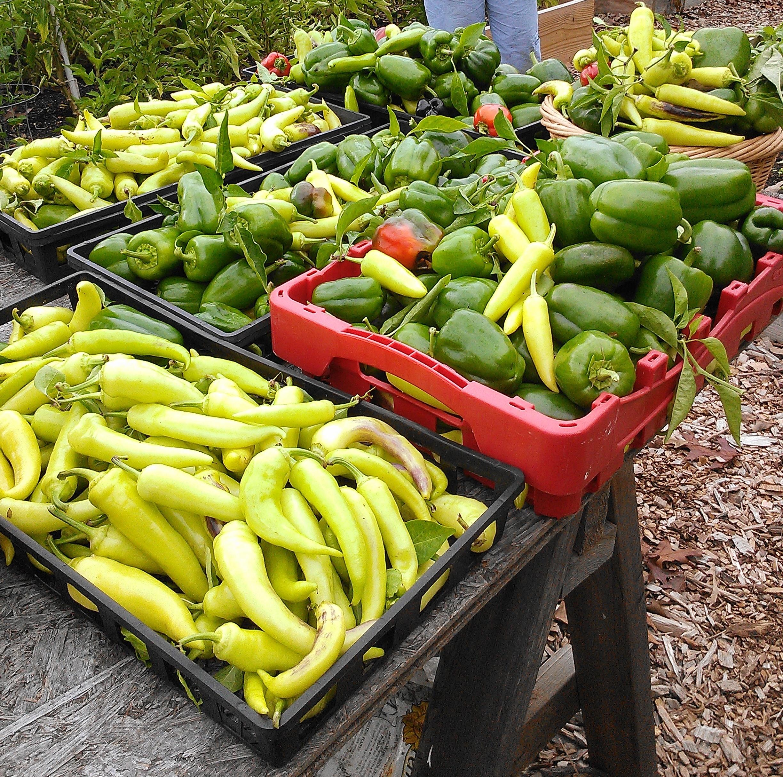 Giving Garden Harvest