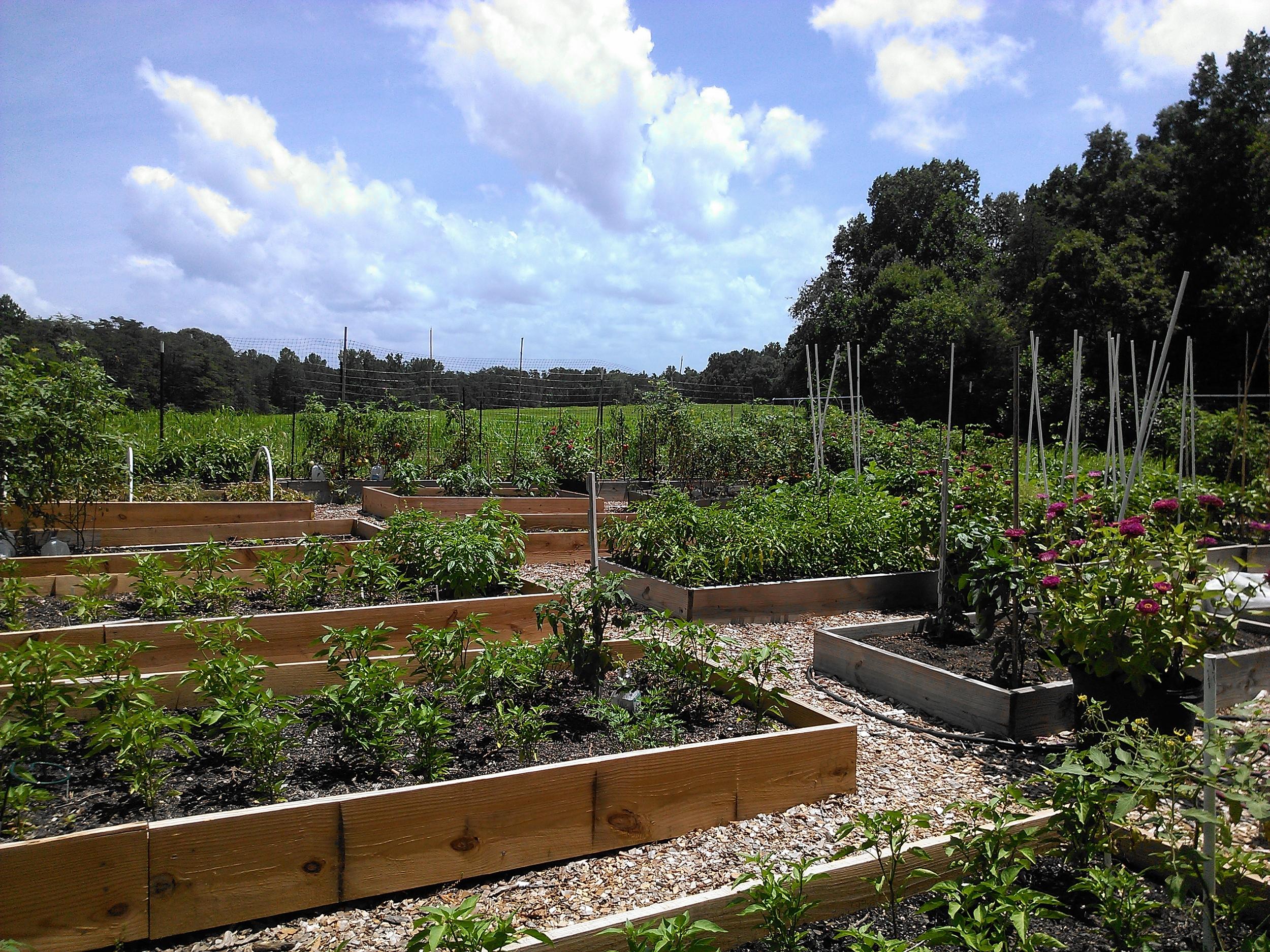 garden pic 6-13.jpg