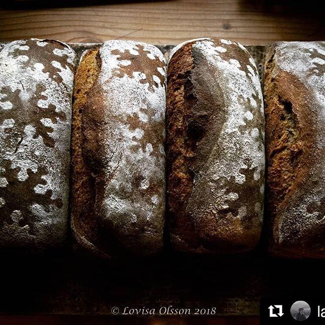 It's amazing how random connections leads to great results. We brewed up a rich seasonal wort for Lovisa's Christmas bread recipe. This is the beginning of an interesting project... #Repost @la.foto (@get_repost) ・・・ Uppe i ottan och bakar av dom sista beställningarna på vörtbröd. Det är så härligt att kunna baka julens bröd på nybyggd vört från ett lokalt mikrobryggeri. 💕  #surdegsvört #artisanbread #hantverksbakat #vörtbröd #surdegsbröd #mikrobryggeri #realbread #äktavara #sourdough #breadsofinstagram #instabread #microbrewery #craftbeer #collaboration