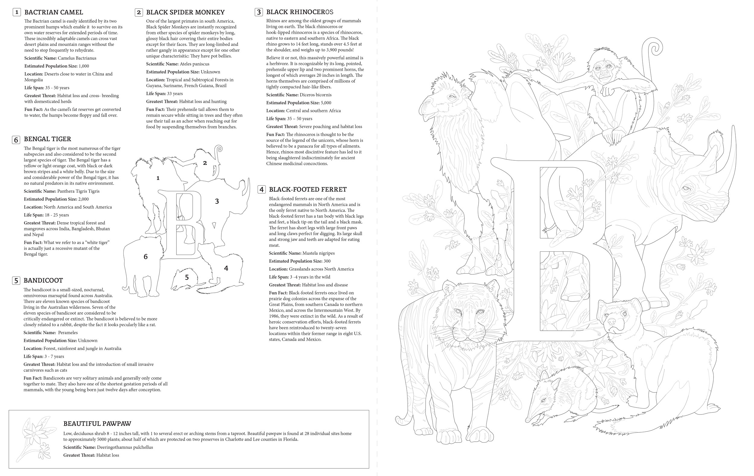 E is for Endangered, Letter B with info