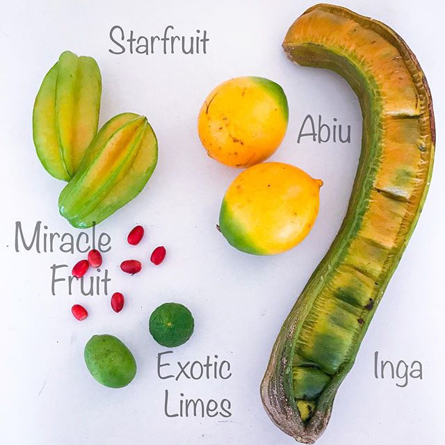 Saturday morning farmers market finds!  It was a very yellow/green palette of fruits today, but I'm really excited about the little red bits!  The boys will be so surprised by the miracle fruit.  Supposedly you chew it and then everything that is sour tastes sweet for about 30 minutes.  #tropicalfruit #exoticfruit #miraclefruit #abiu #inga #starfuit #lime #hawaiilife #farmersmarket #farmersmarketfinds #everydayfamilyadventure #familytravel #fulltimefamily