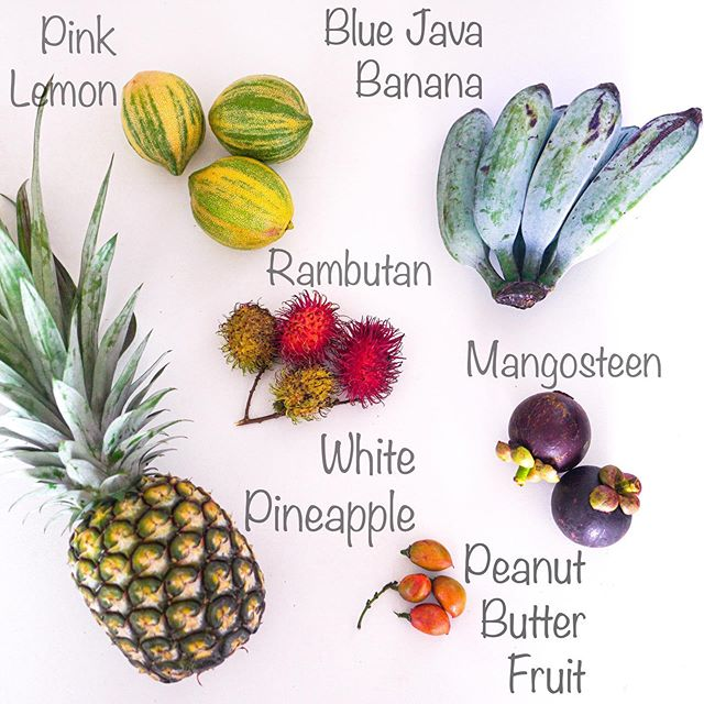 Stay tuned for another tropical fruit tasting video coming soon!  Have you ever seen a blue banana?  I love how I am surprised by something new and mysterious every time I go to the farmers market here!  #tropicalfruit #exoticfruit #peanutbutterfruit #bluejavabanana #rambutan #mangosteen #variegatedlemon #hawaiilife #farmersmarket #farmersmarketfinds #everydayfamilyadventure #familytravel #fulltimefamily