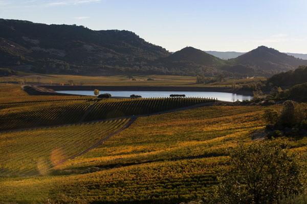 estate-vineyard.jpg