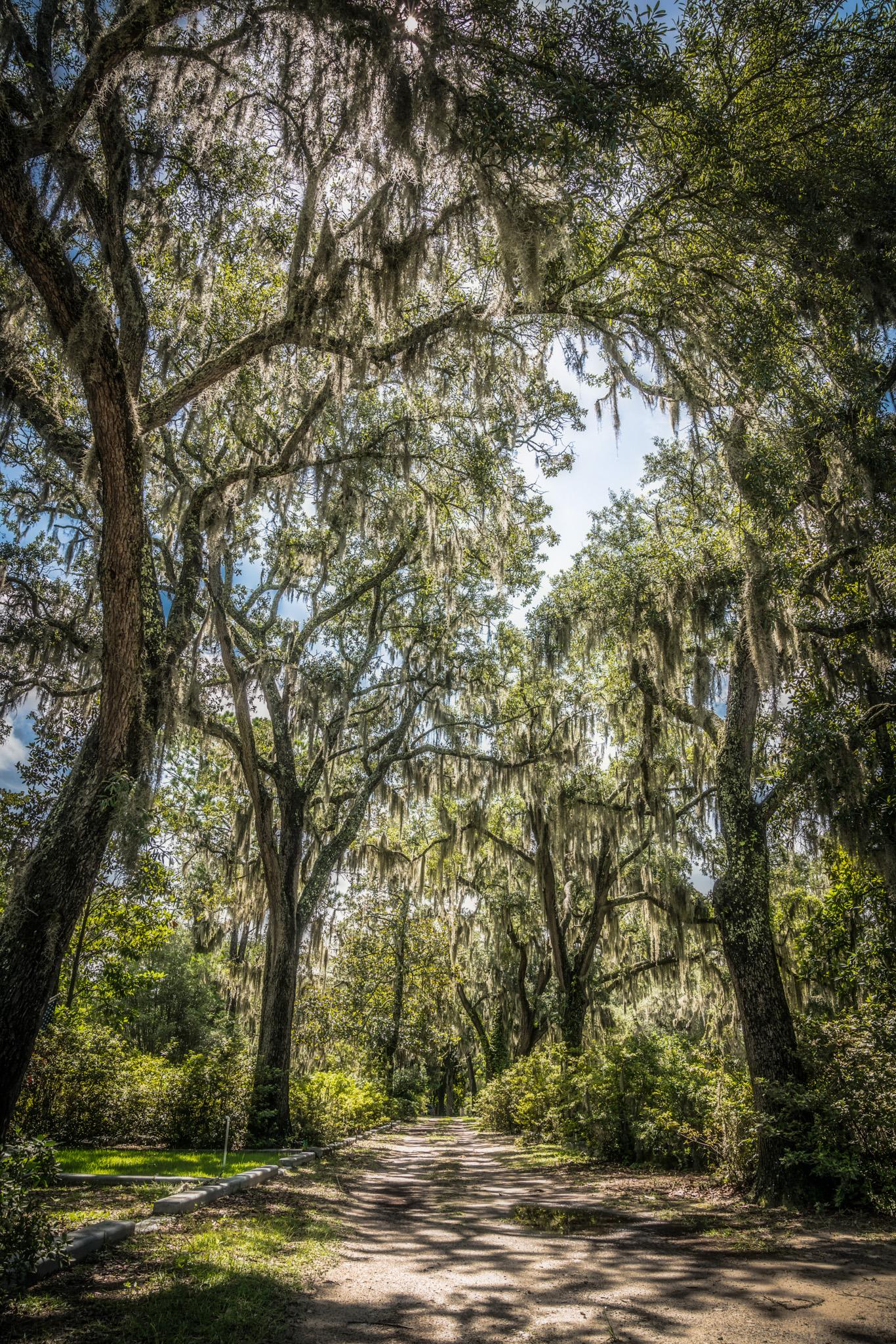 ANP_Savannah-08232.jpg