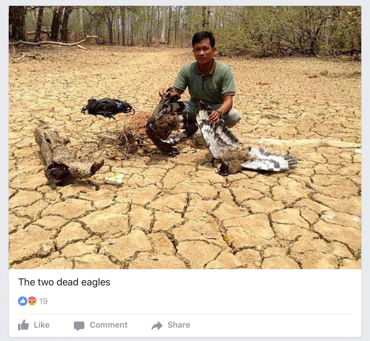 Credit: Angkor Centre for Conservation of Biodiversity via Facebook.
