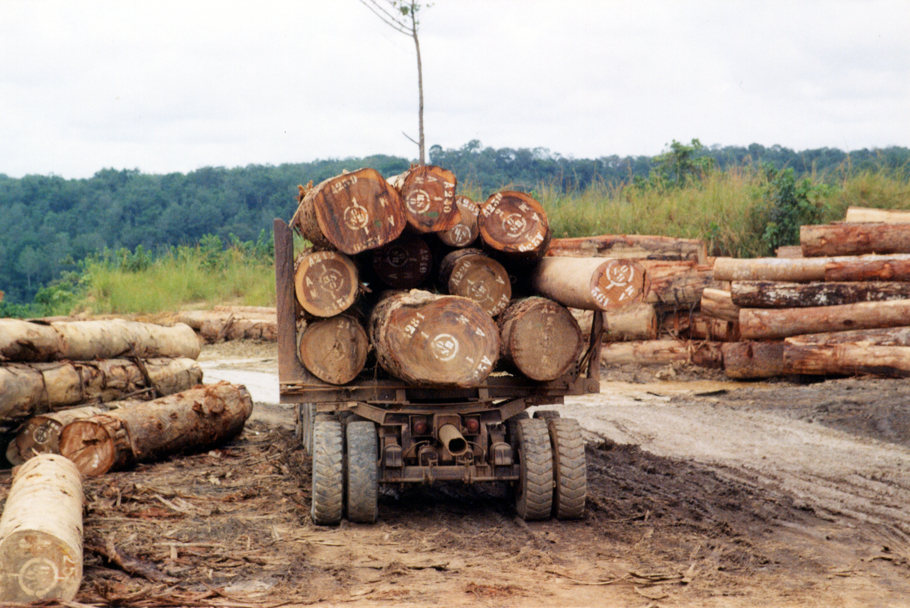 An industrial logging operation in the Congo Basin.