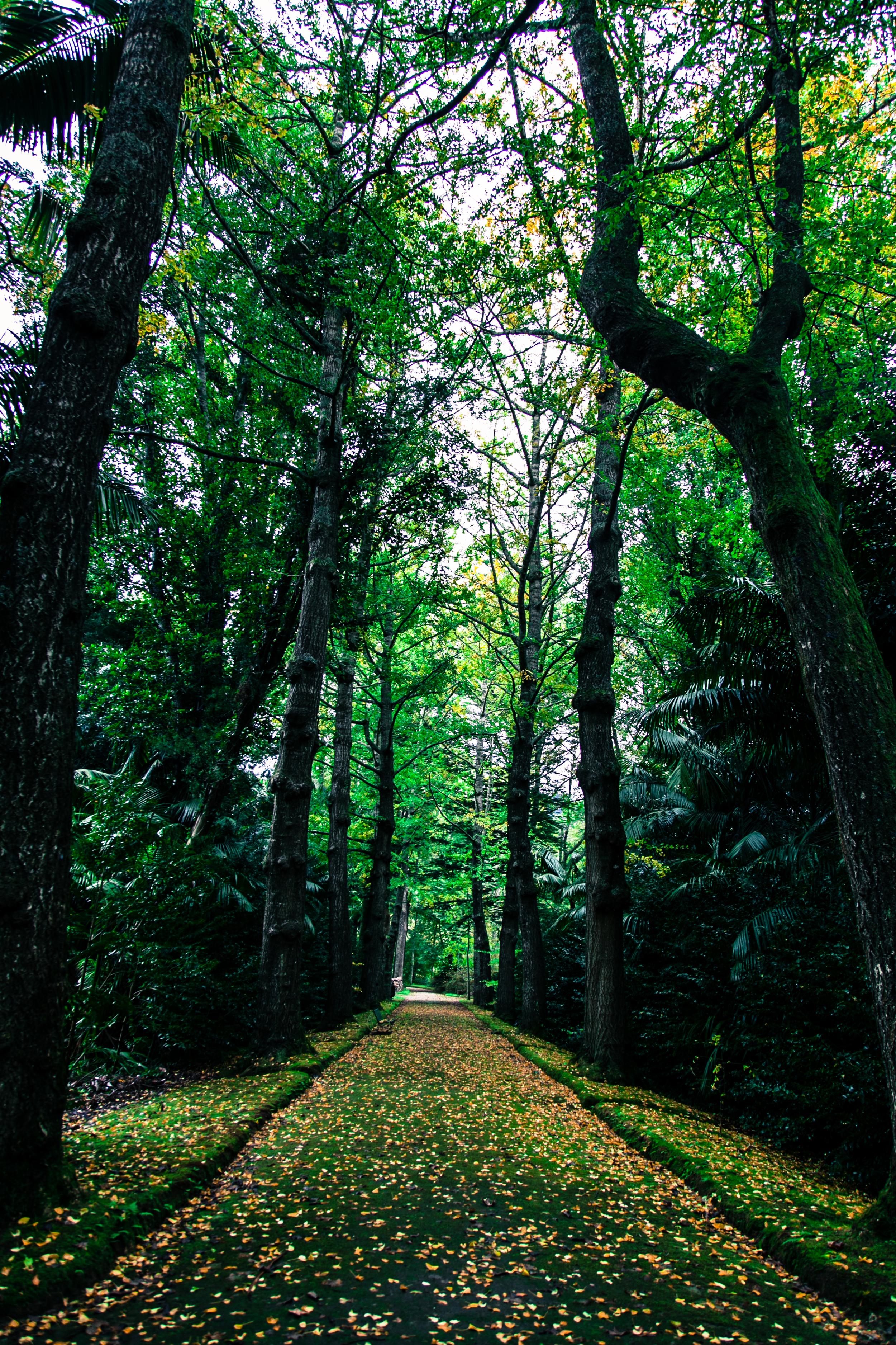 Autumn_2014_KH-1.jpg