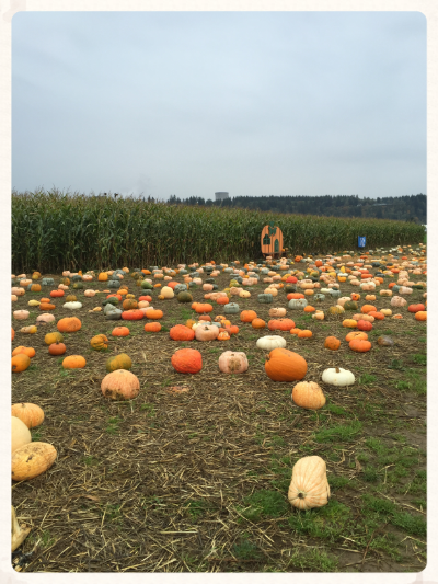 A variety of pumpkins grown in Montesano this season.
