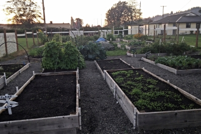 The garden in the first steps of the winterization process.