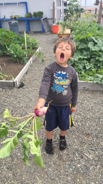 A volunteer holds a turnip from the garden, maybe his excitement came from microorganisms in the soil!
