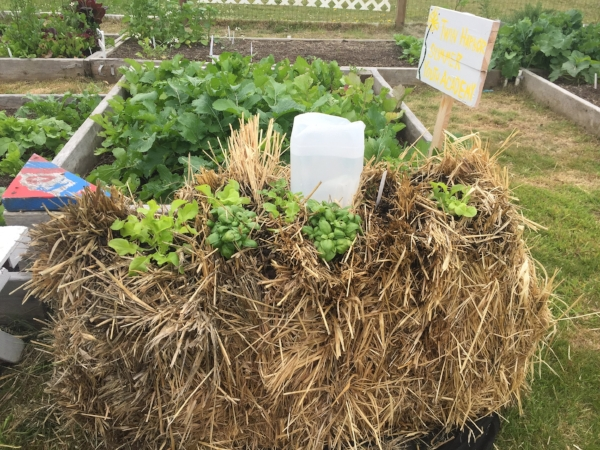 Have you seen our haybale beds? We learned all about new ways to make the most of our garden space!