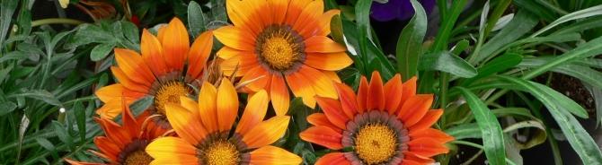flower crop.jpg