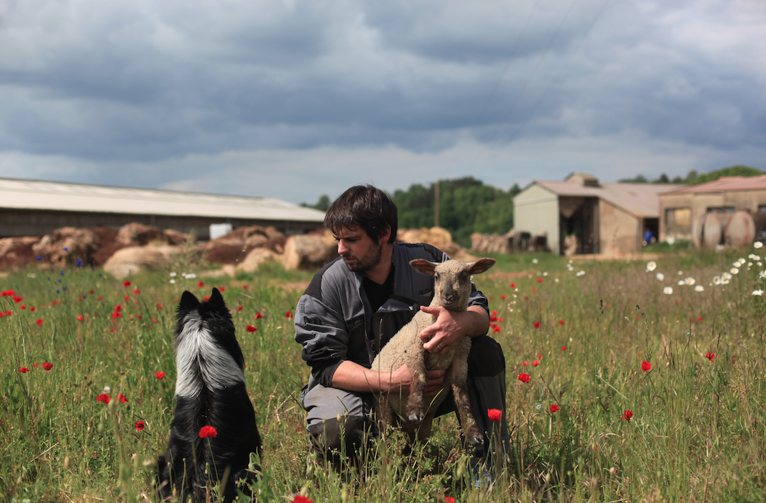 Guillaume Verdin at his lamb farm in Noyers-sur-Serein, in the Burgundy region of France