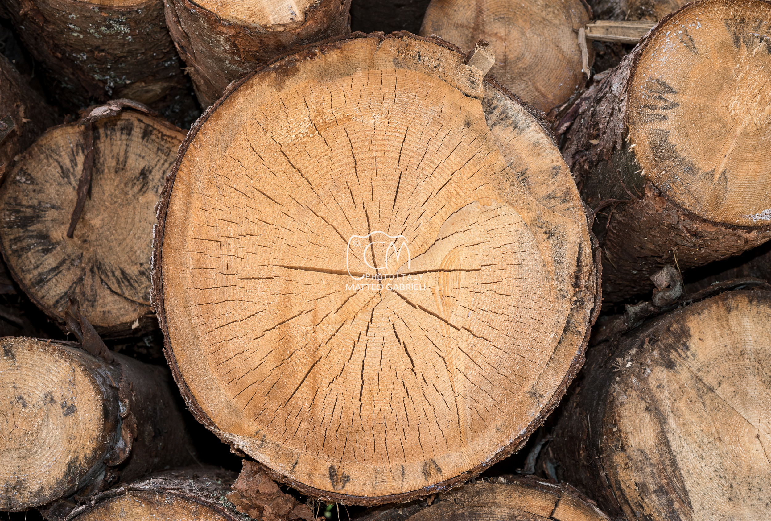 Stack of pine logs, close up, Italy