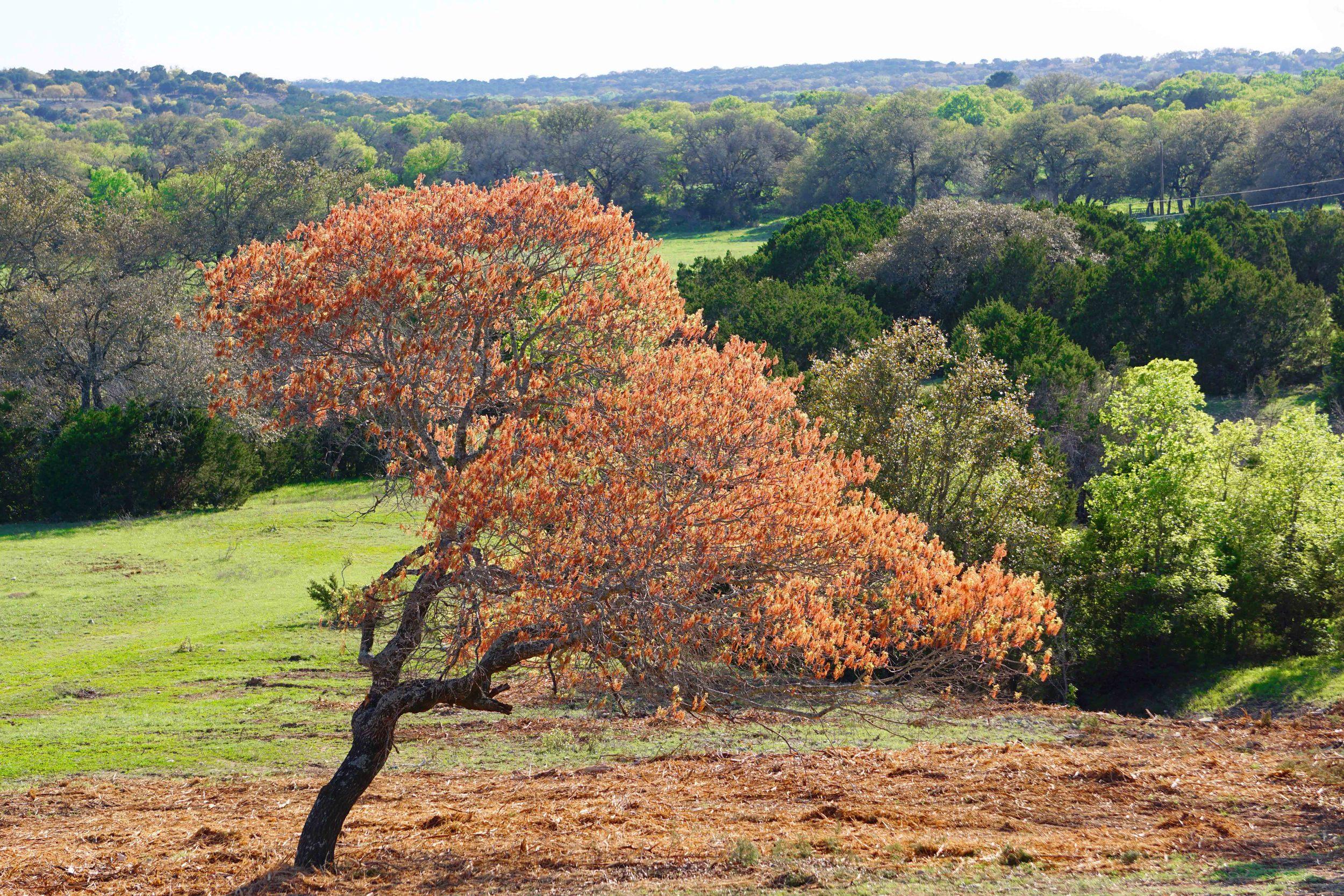 401k Ranch Briggs, TX
