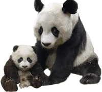 panda_PNG1.png