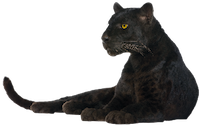 Panther-PNG-Image.png