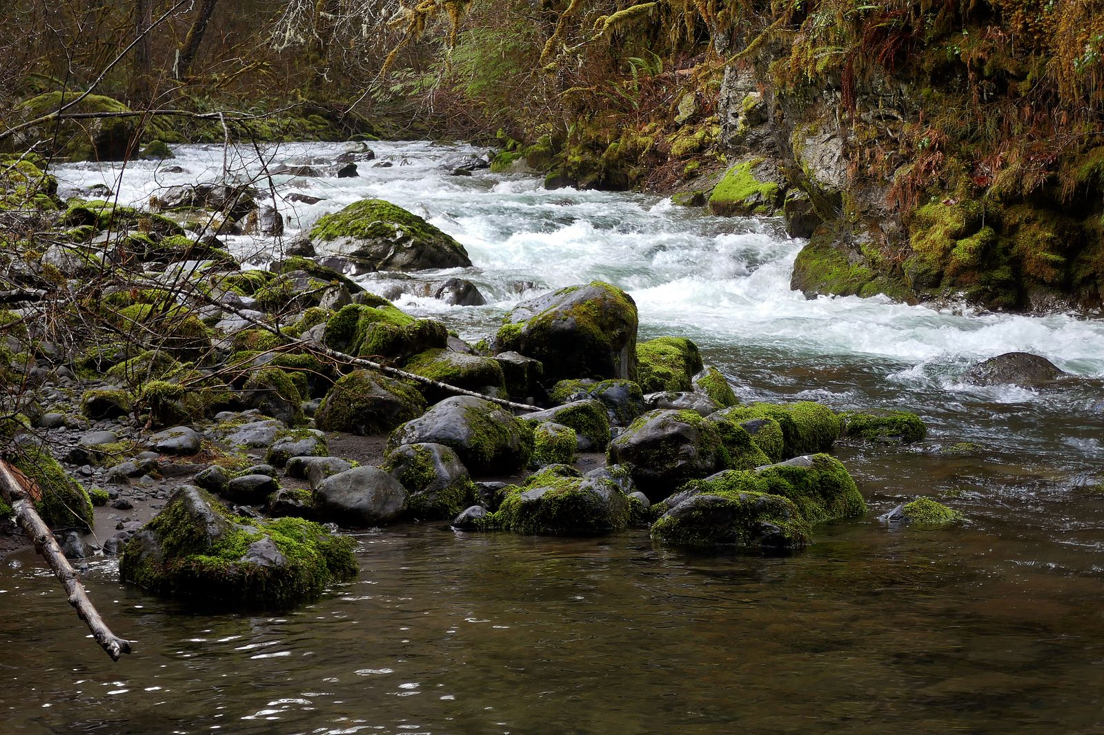 The rapids on the Big Quilcene River