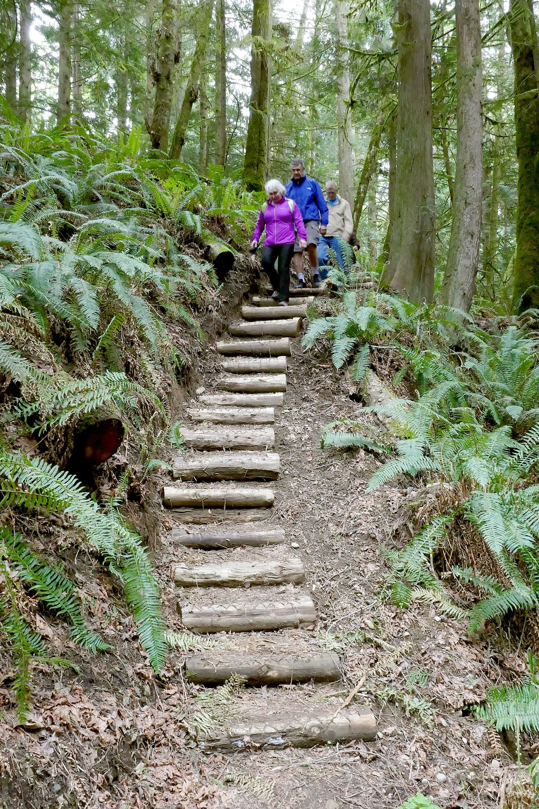 More Osprey Trail steps all created and installed by volunteers