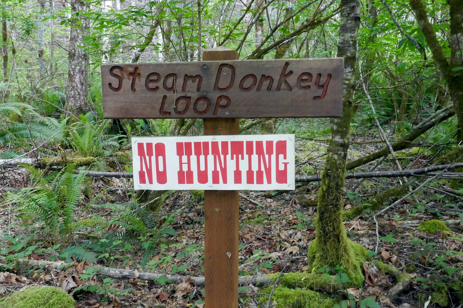 We finished the Maple Valley trail and begin the Steam Donkey trail