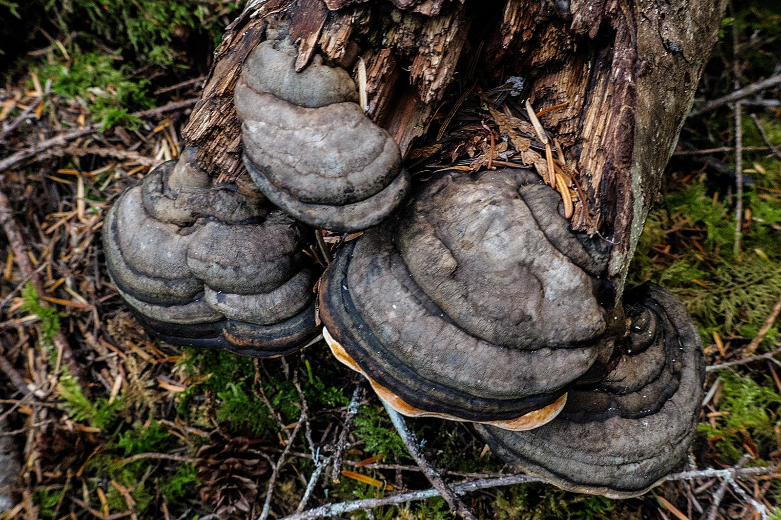 Mushrooms on the end of a log