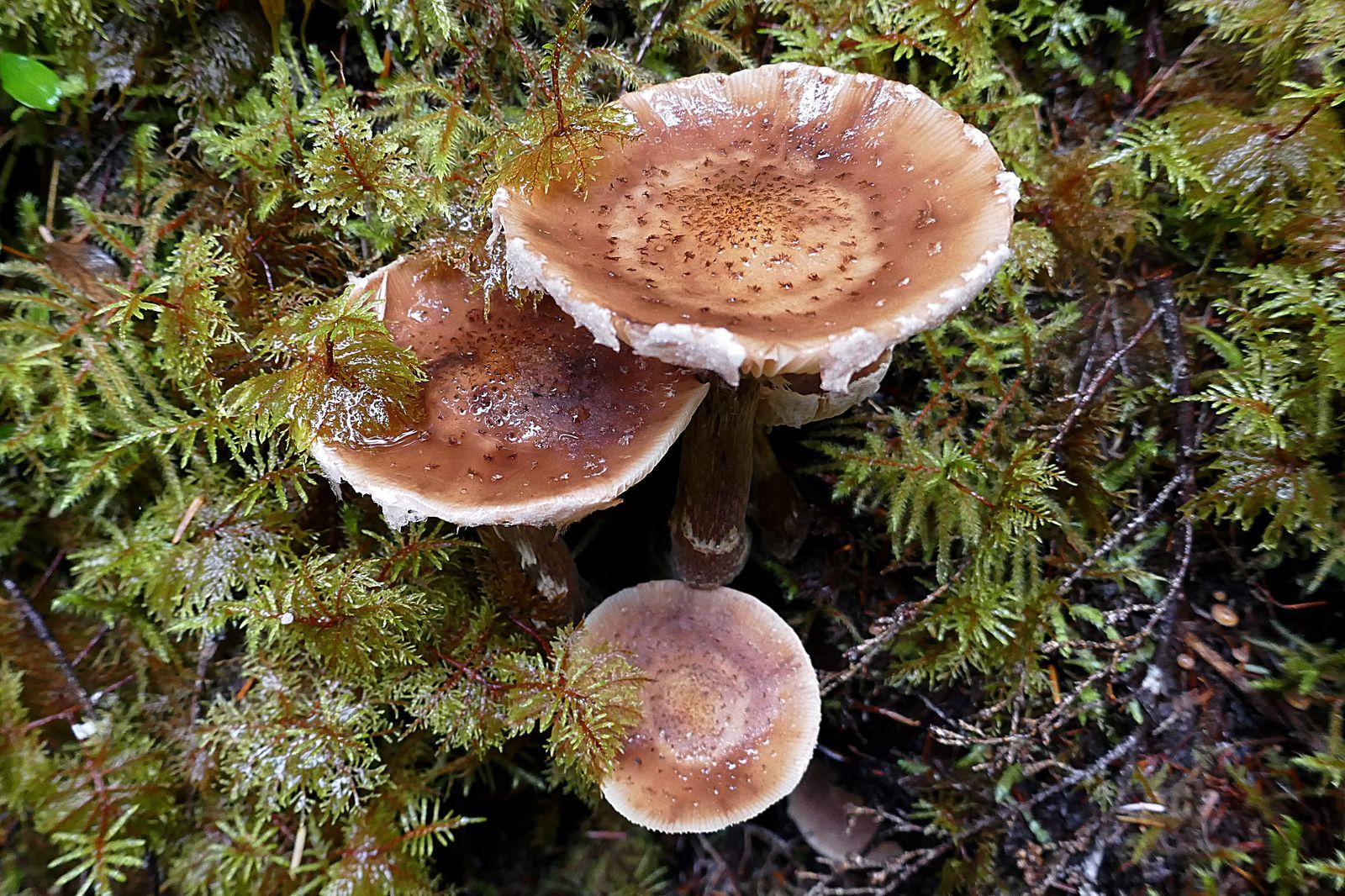 More pretty mushrooms