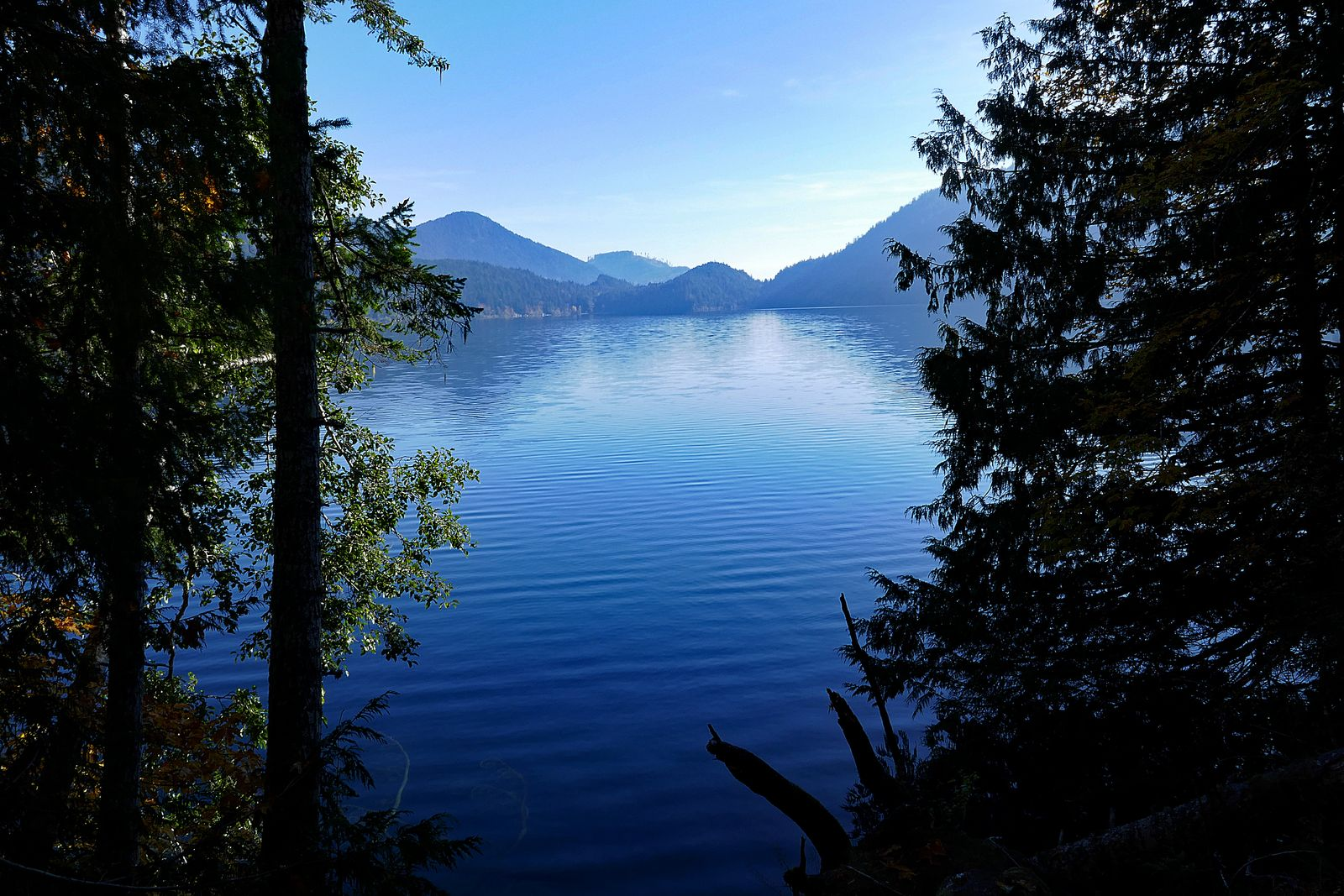 We hiked next to Lake Crescent