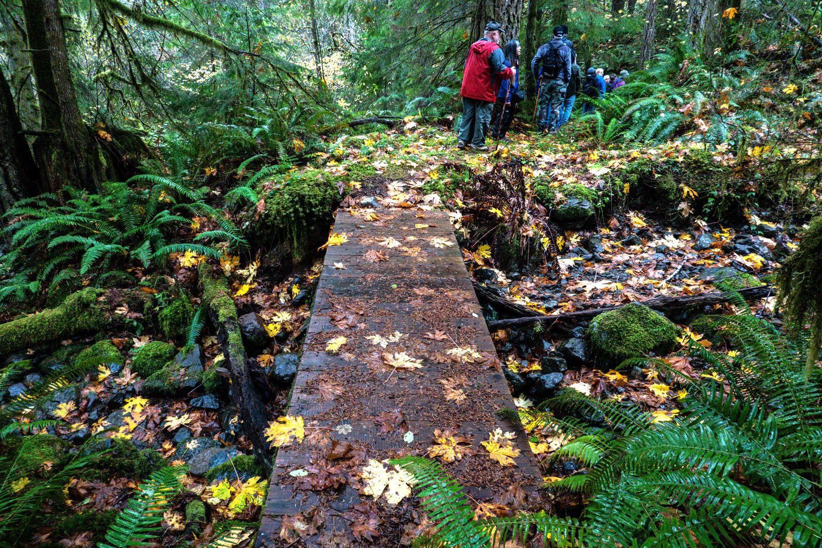 Fall leaves were everywhere