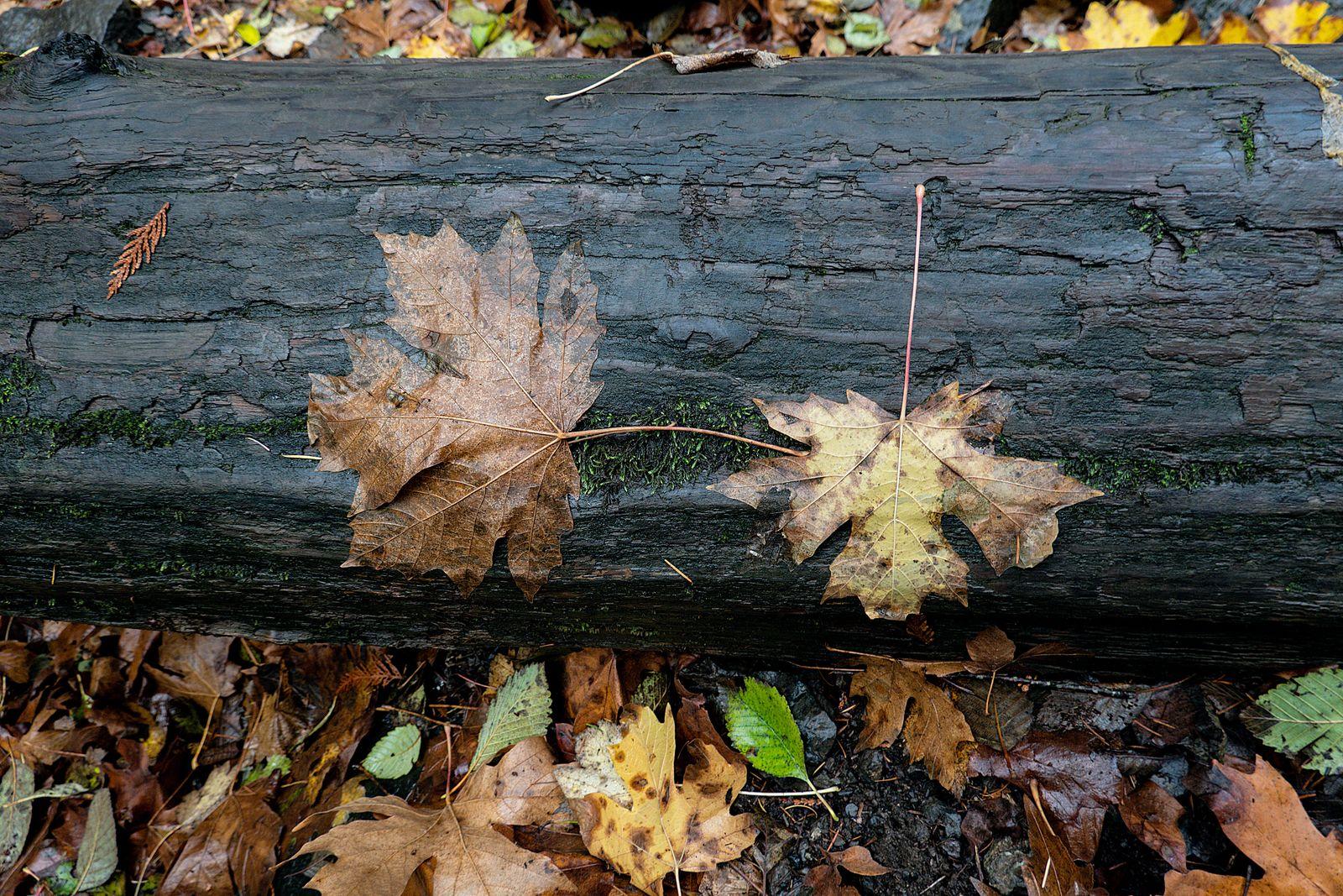 The fall leaves were everywhere