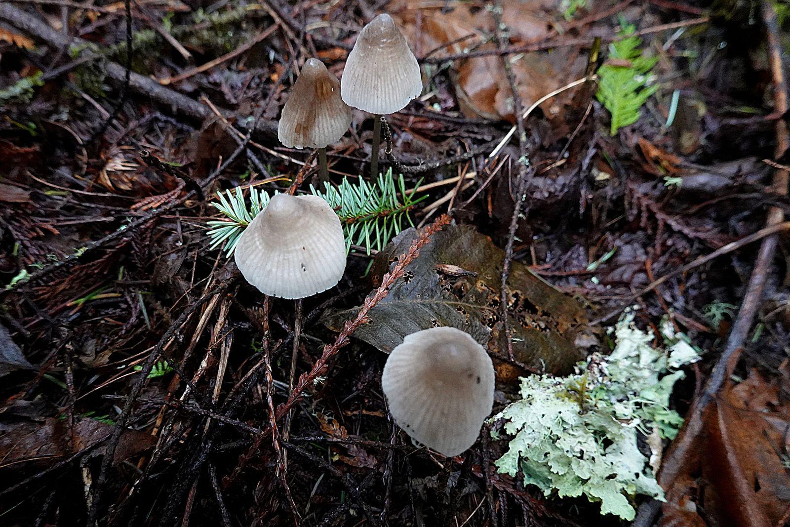 A pretty little clump of mushrooms