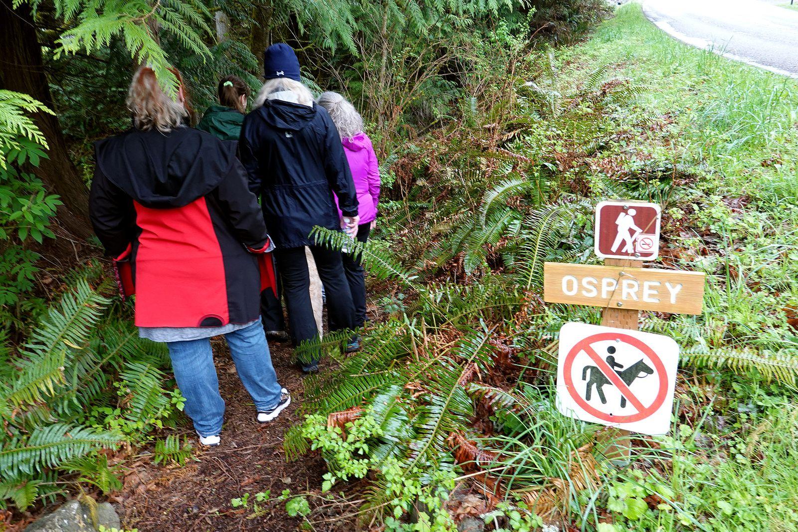 Down the Osprey Trail
