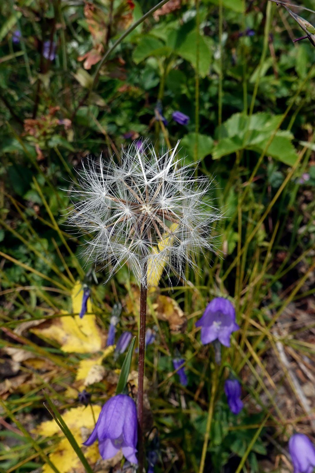 I like the dry flower puff-ball