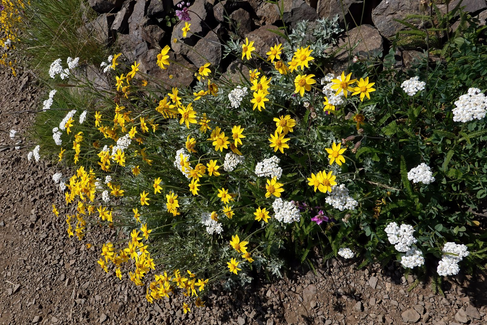 Another example of all the flowers along the trail
