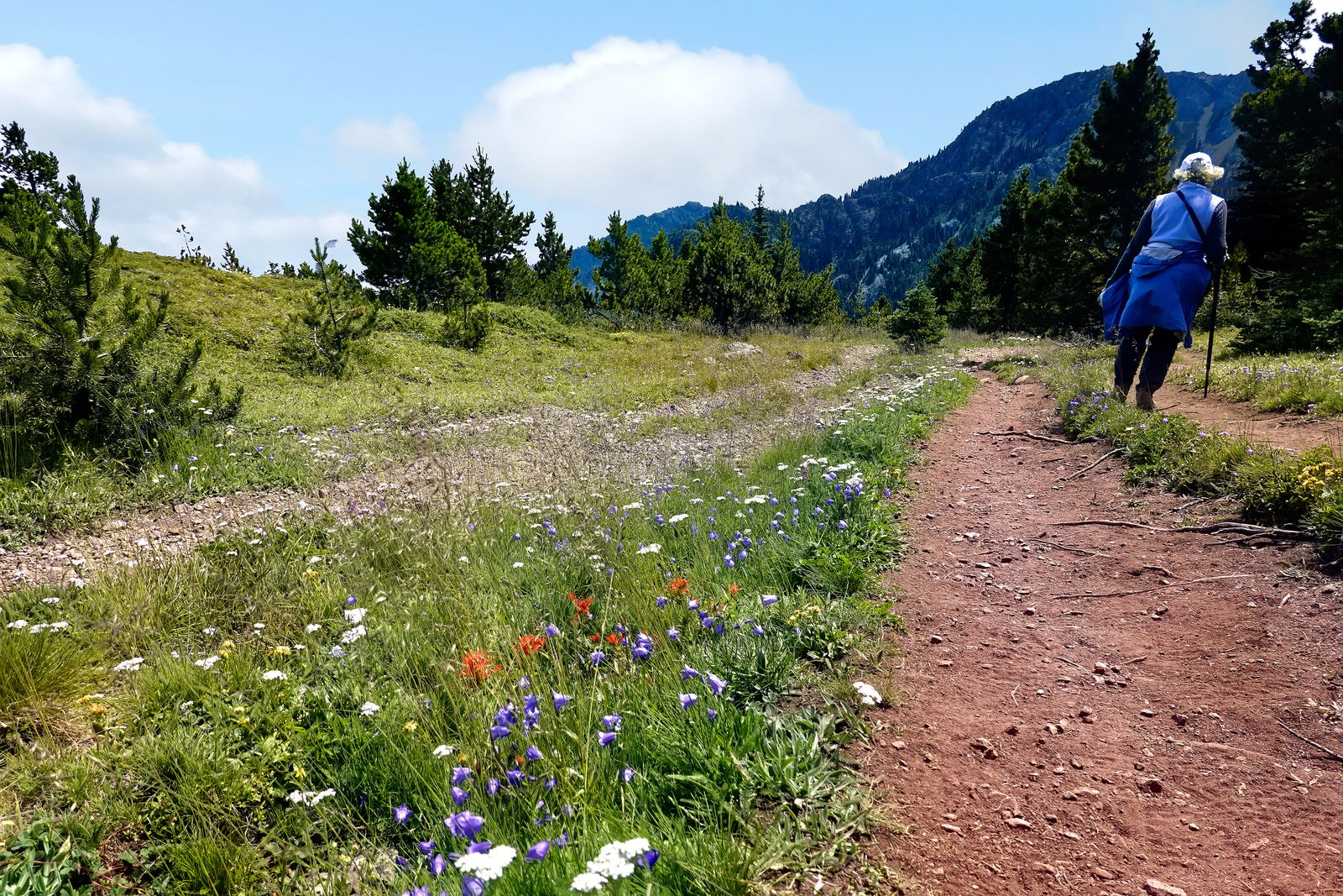 Note the flowers all along the trail