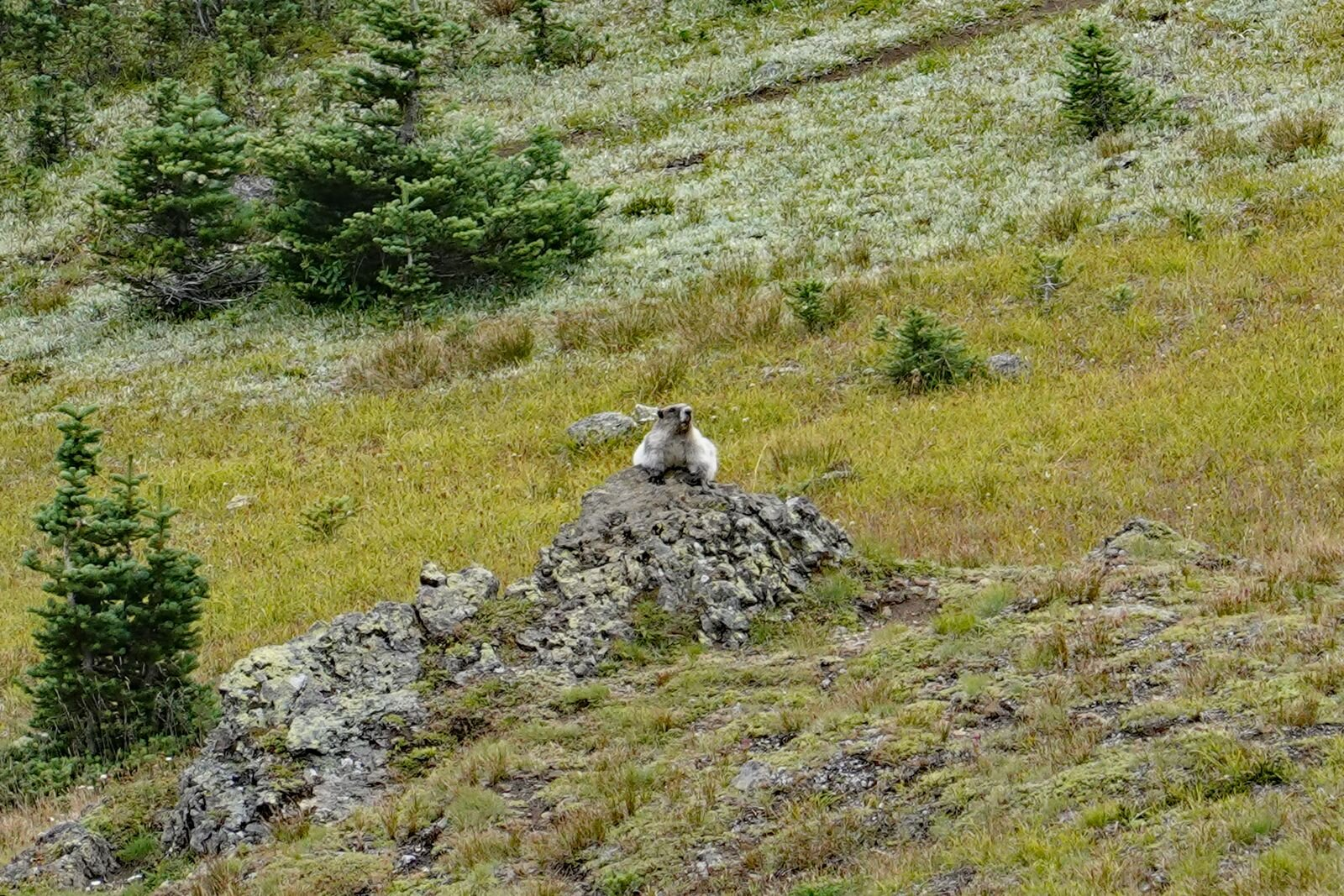 It's not called Marmot Pass for nothing