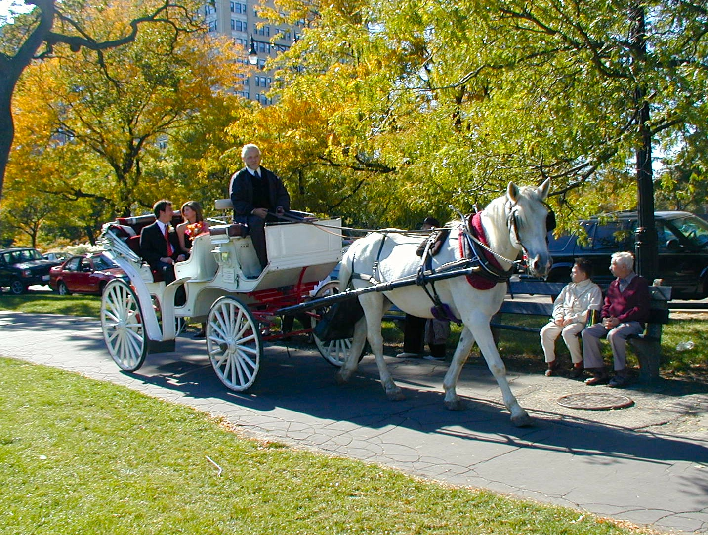 lincoln park gardens wedding