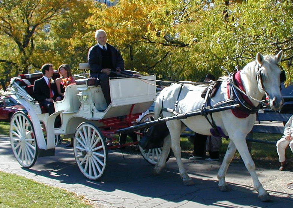 Dante wedding in park.jpg