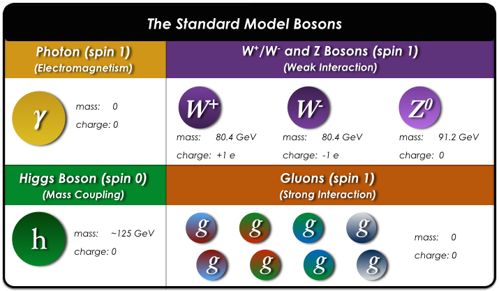 The Bosons & Force Mediators of the Standard Model of Particle Physics