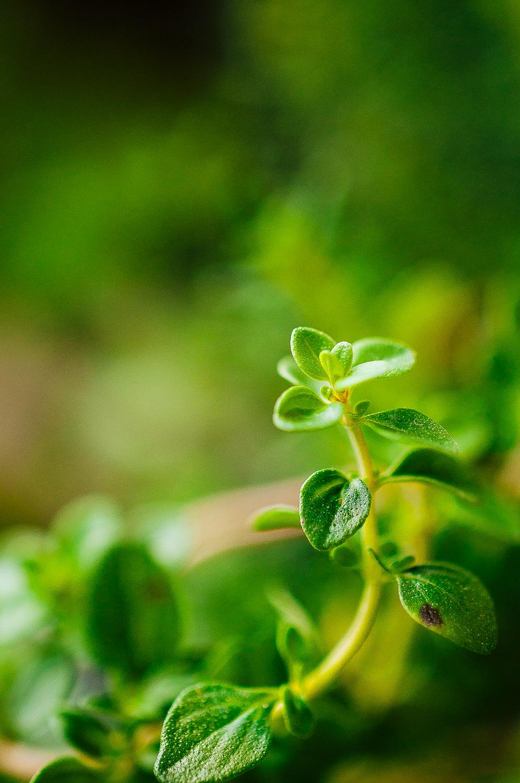 Blueberry Lemon Thyme Galettes 2.jpg