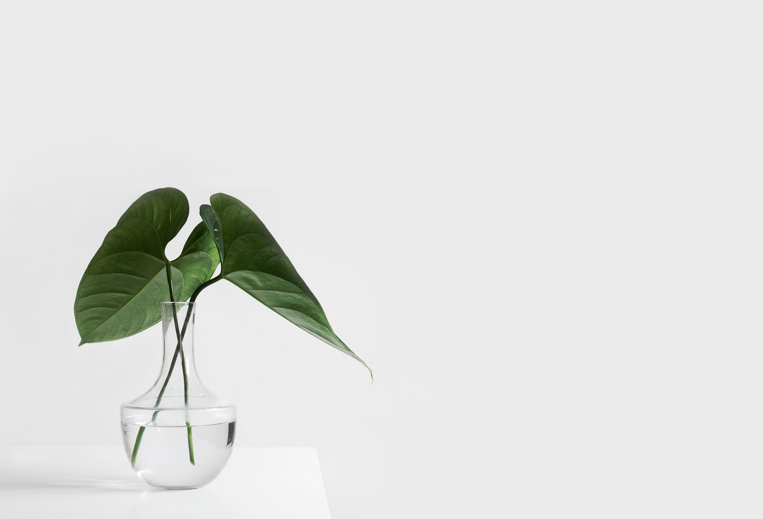 green plant on white table, counseling in columbia mo