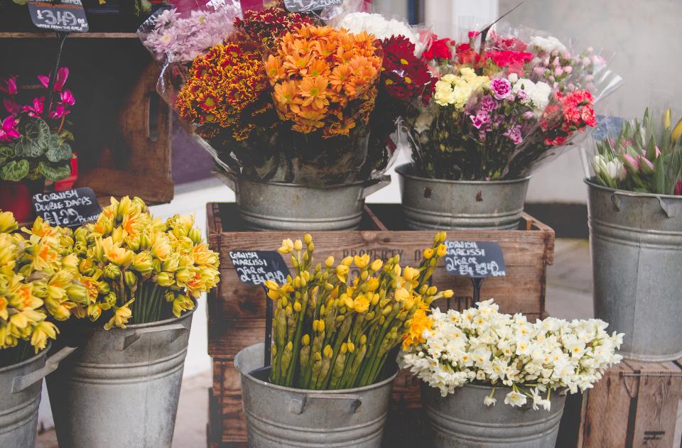flowers, flowers in pots, variety of flowers