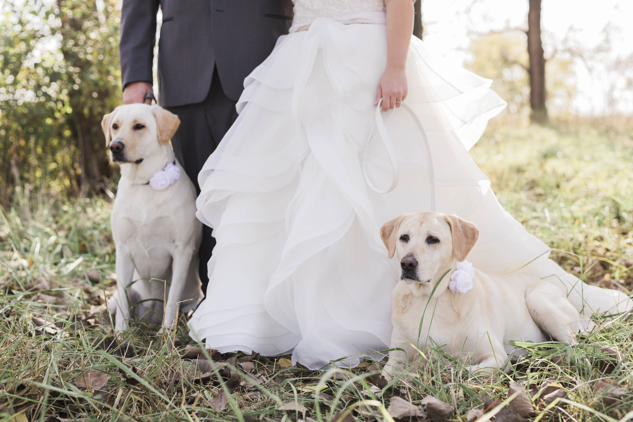 blog_dog_in_wedding-4.jpg