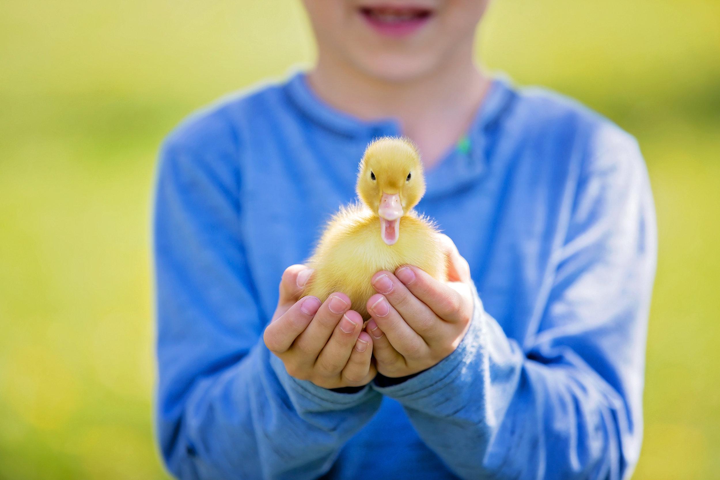 duck-theme.jpg