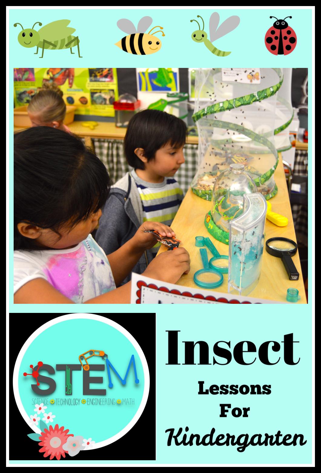 Stem Insect Lessons For Kindergarten Kindergarten Kiosk