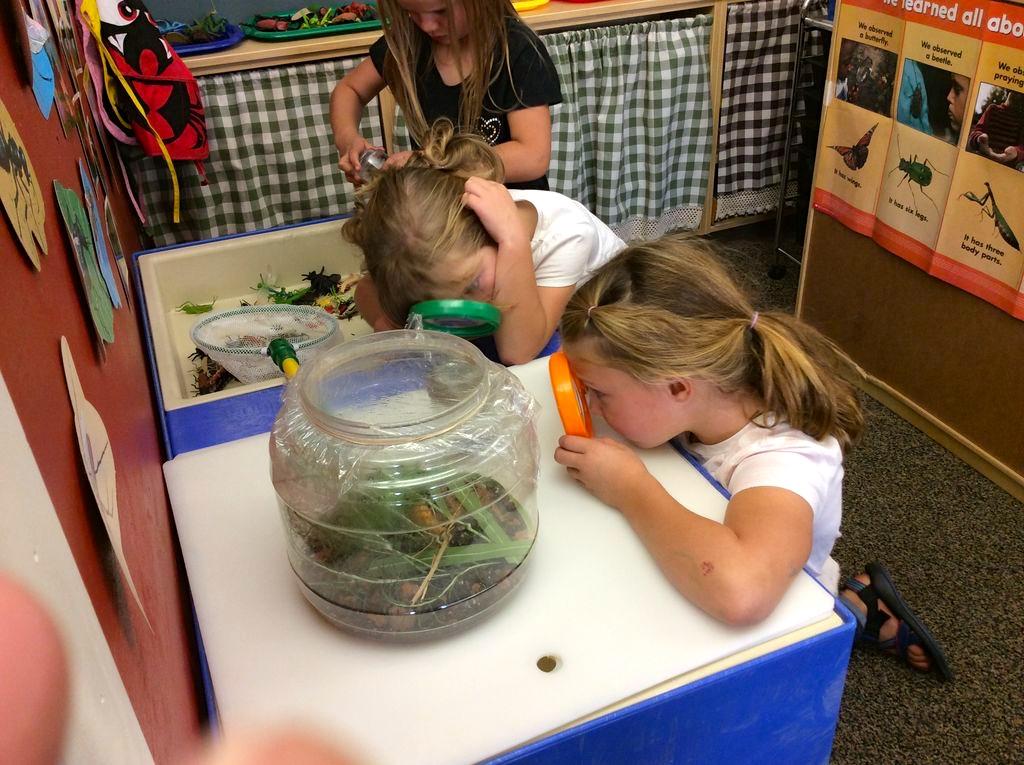 insects-kindergarten.jpg