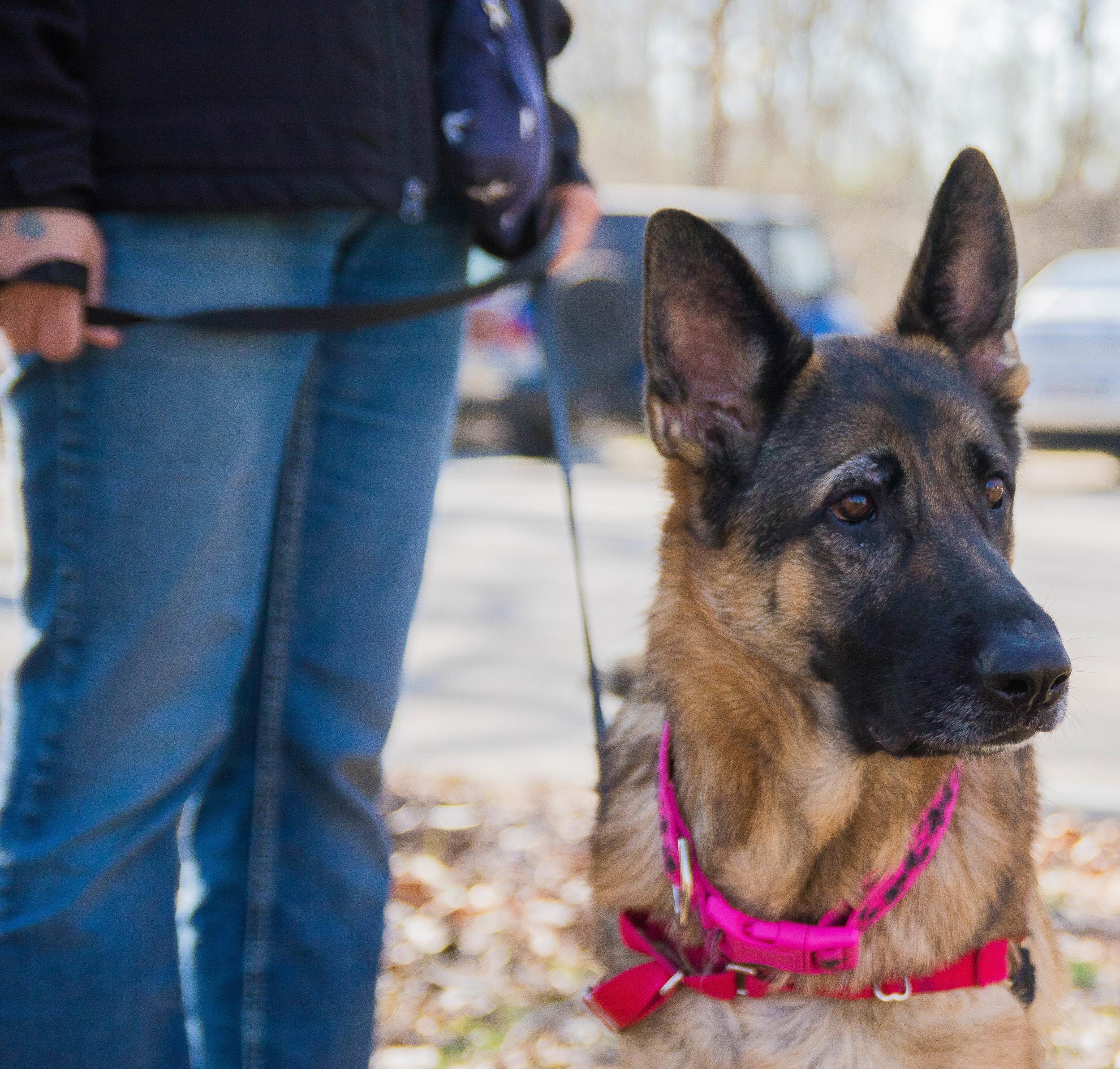 Dog_EasterEggHunt-7.jpg